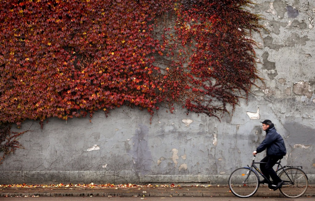 A cyclist rides past autumn-coloured ivy climbing the wall of a building in downtown Copenhagen, Denmark, in this file picture taken November 2, 2010. Denmark overtook Switzerland as the world's happiest place, according to a report on March 16, 2016 that urged nations regardless of wealth to tackle inequality and protect the environment.   REUTERS/Bob Strong/Files