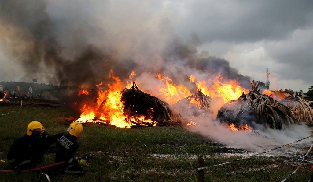 Firemen control the burning of elephant tusks at the Nairobi National Park near Nairobi, Kenya, on Saturday. (Reuters/Thomas Mukoya)