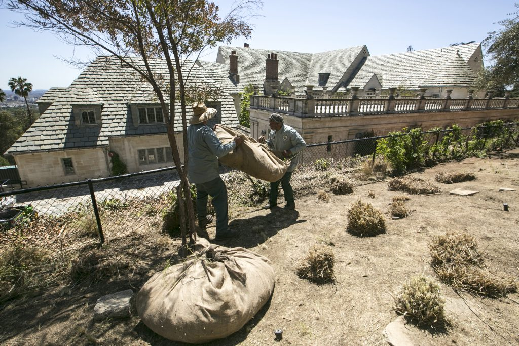 FILE - In this April 8, 2015 file photo, gardeners remove grass plants trimmed ahead of planned watering reductions at the Greystone Mansion and Park in Beverly Hills, Calif. California water officials say they will consider dropping a mandate requiring conservation in the state's fifth year of drought. The State Water Resources Control Board on Wednesday, May 18, 2016, will vote on whether to give local water districts control of setting their own conservation targets. (AP Photo/Damian Dovarganes, File)