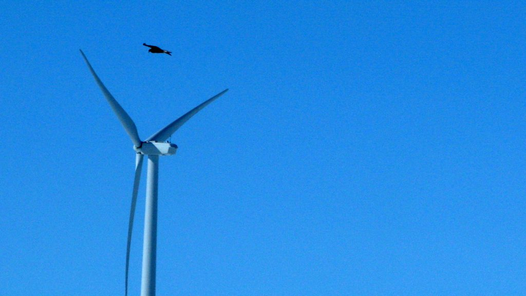 A golden eagle is seen flies over a wind turbine farm in Converse County, Wyo. (AP Photo/Dina Cappiello, File)