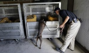 TSA dog trainer Ford Rinewalt works with Sylvia, a bomb-sniffing dog, in a makeshift warehouse during a drill at Lackland Air Force Base in San Antonio. (AP Photo/Eric Gay)