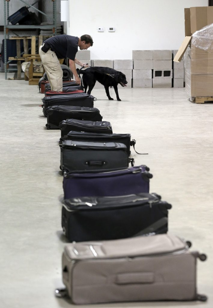 TSA dog trainer Hans Phifer works with Rufus, a bomb-sniffing dog, in a makeshift luggage area during a drill at Lackland Air Force Base in Texas. (AP Photo/Eric Gay)