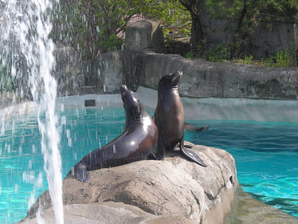 Sea lions at the Pittsburgh Zoo and PPG Aquarium