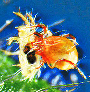 A BioBee developed bug (BioBee)