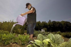 Peter Ellermann waters his garden at the Community Gardens in Concord, N.H. The summer drought has forced Ellermann to cart in 30 gallons of water in five fallen containers three times a week to keep his plants healthy. (AP Photo/Jim Cole)