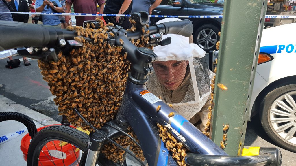 NYPD Detective Daniel Higgins begins the process of removing bees enveloping the front of a bicycle parked in Midtown Manhattan. (NYPD/@nypdbees via AP)