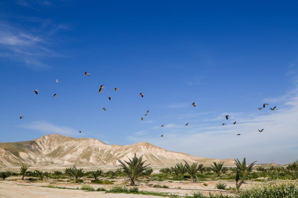Birds fly over the Jordan Valley (Yaakov Lederman/Flash90)