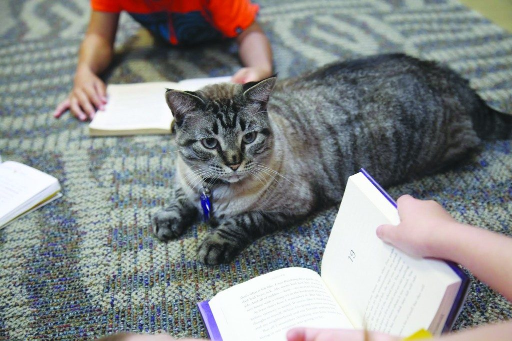 Browser the cat sits among a group of children being read to in the city's public library Thursday, June 30, 2016, in White Settlement, Texas.