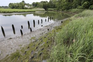 Old pilings are seen in Matawan Creek, near where a dock was located in 1916. (AP Photo/Mel Evans)