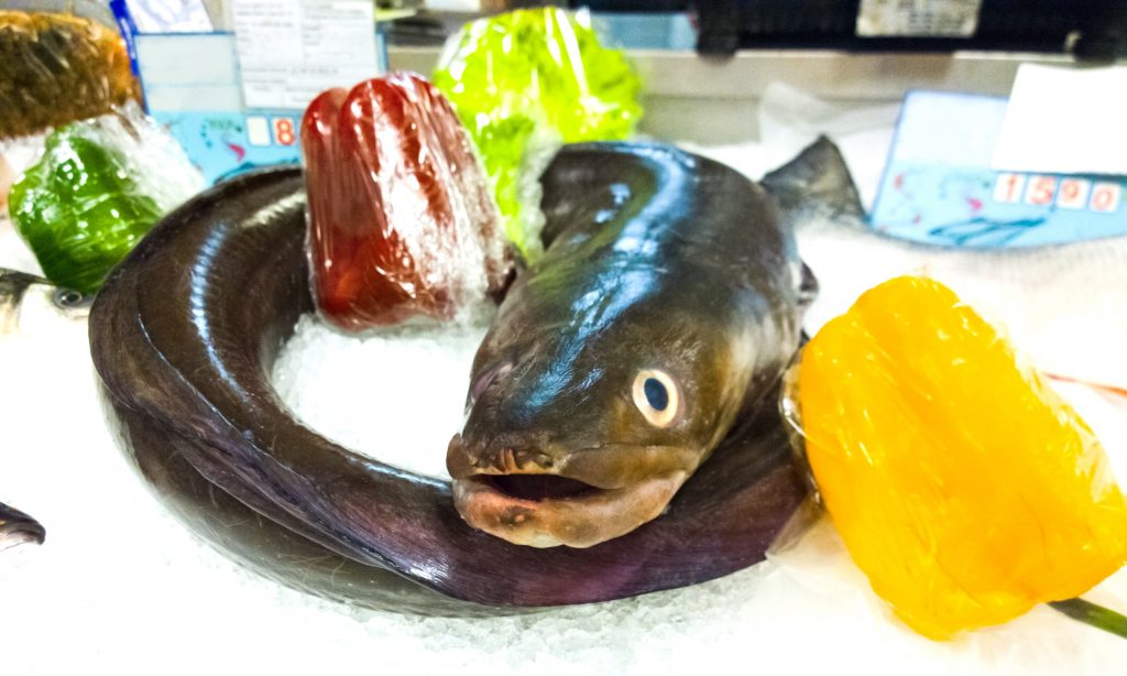 An eel on ice in a fish market.