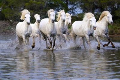 Horses. Photo by Doron Horowitz/FLASH90