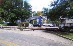 Images of the damage wrought by Hurricane Hermine on Tallahassee. (Chabad of Tallahassee)