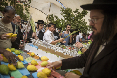 Jewish men examine citrons, known as an etrog, for imperfections, at the 'four-species' market in Jerusalem on September 27, 2015. The citron is one of the four species used during rituals in the week-long Jewish holiday of Sukkot. Sukkot commemorates the Israelites 40 years of wandering in the desert and a decorated hut or tabernacle is erected outside religious households as a sign of temporary shelter. Photo by Hadas Parush/Flash90 *** Local Caption *** ????? ????? ??? ???? ????? ?????? ??? ???????