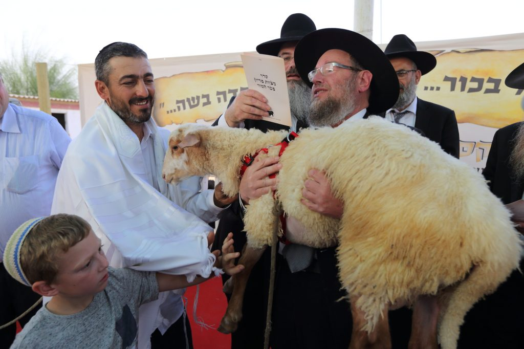 Farmer Doron Tygg handing the sheep to the Kohen, Rabbi Shmuel Bloom.