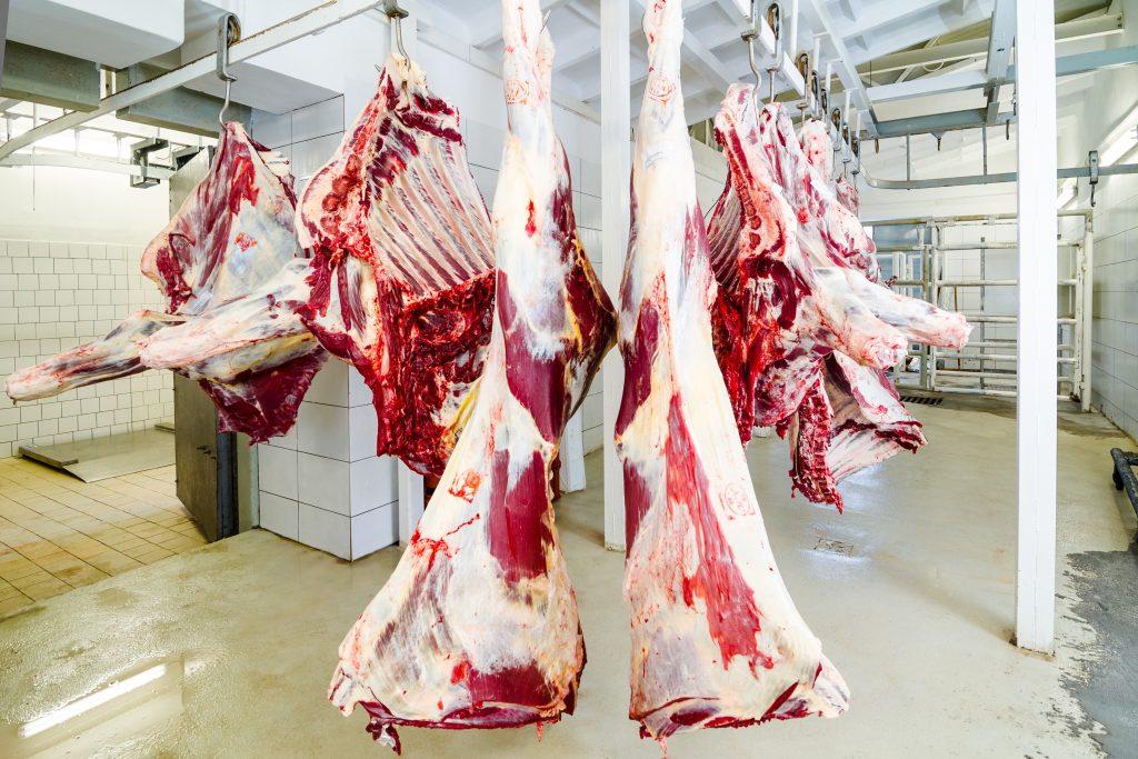 Belgium, legislation, stunning, kosher, halal, meat, Flemish, Antwerp, religious slaughter, shechitah