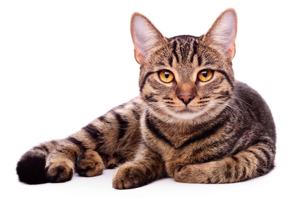 cat, declaw, New York