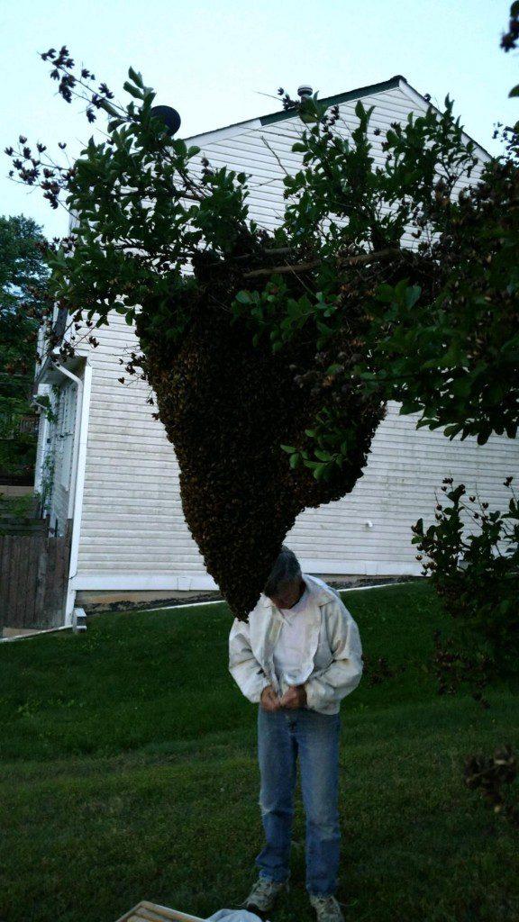 40,000 Bees, Swarming, Virginia, Neighborhood
