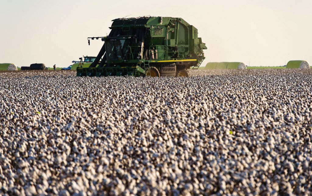 Cotton, Prices, Options, Jump