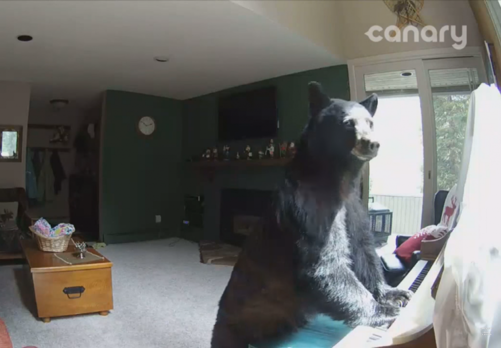 Bear, Breaks, House, Plays, Piano, Not Very Well