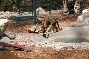 animals Syria Jordan
