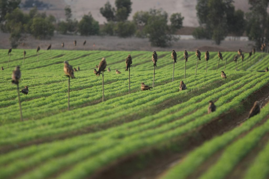 Drip Irrigation Pioneer Netafim Sold For 1 5b Hamodia Com