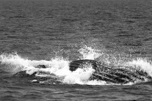 whales New York