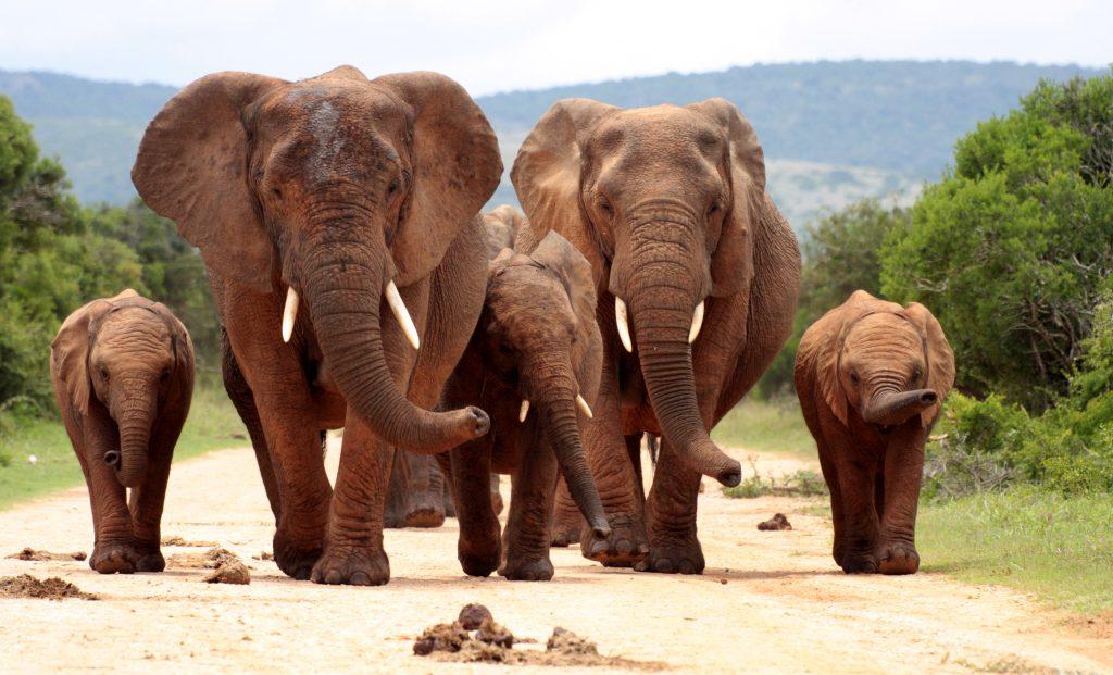 elephants personhood