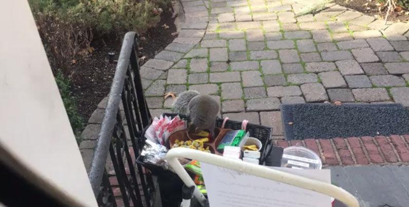 squirrel steals