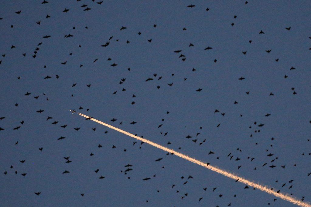 starlings Rome