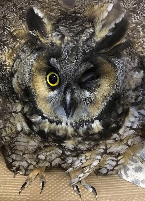 owl Central Park, New York, owl