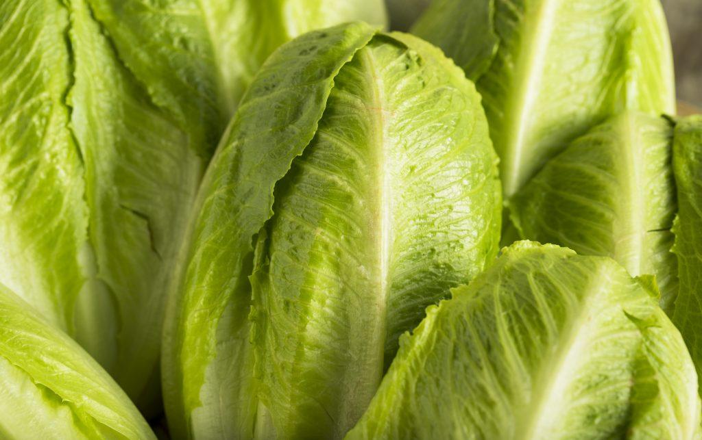 romaine lettuce, e. coli