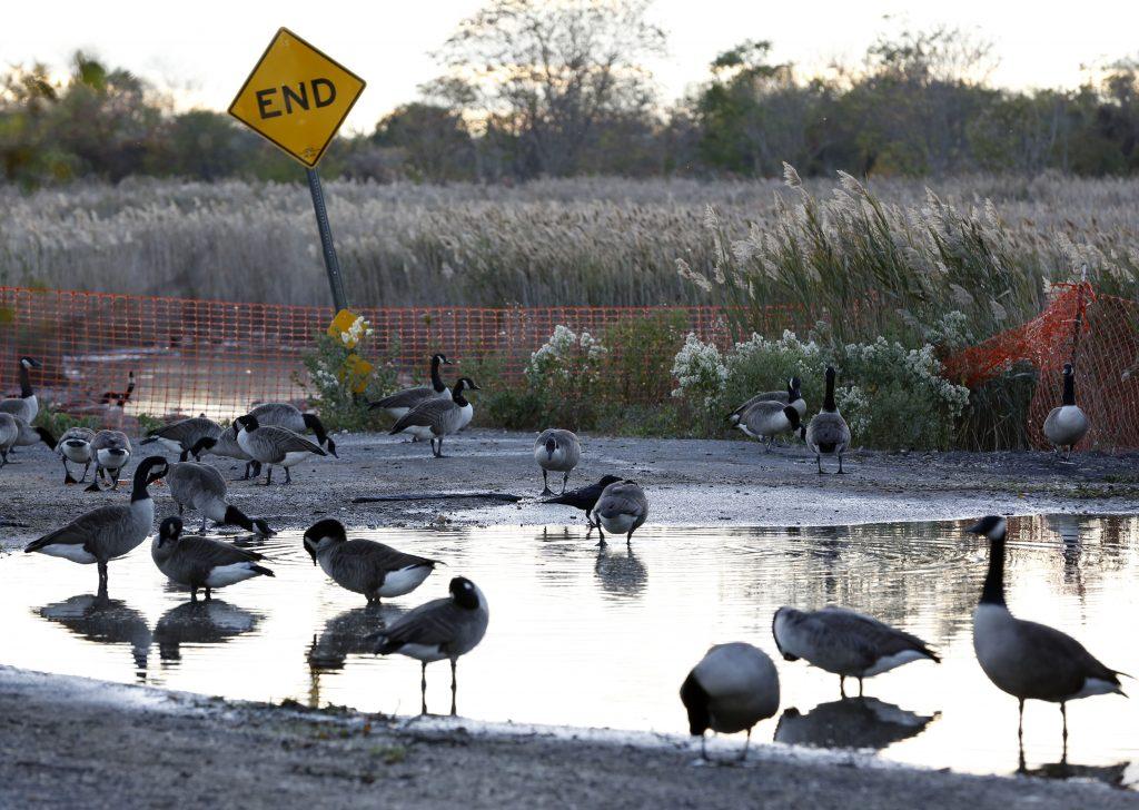 canada goose long island