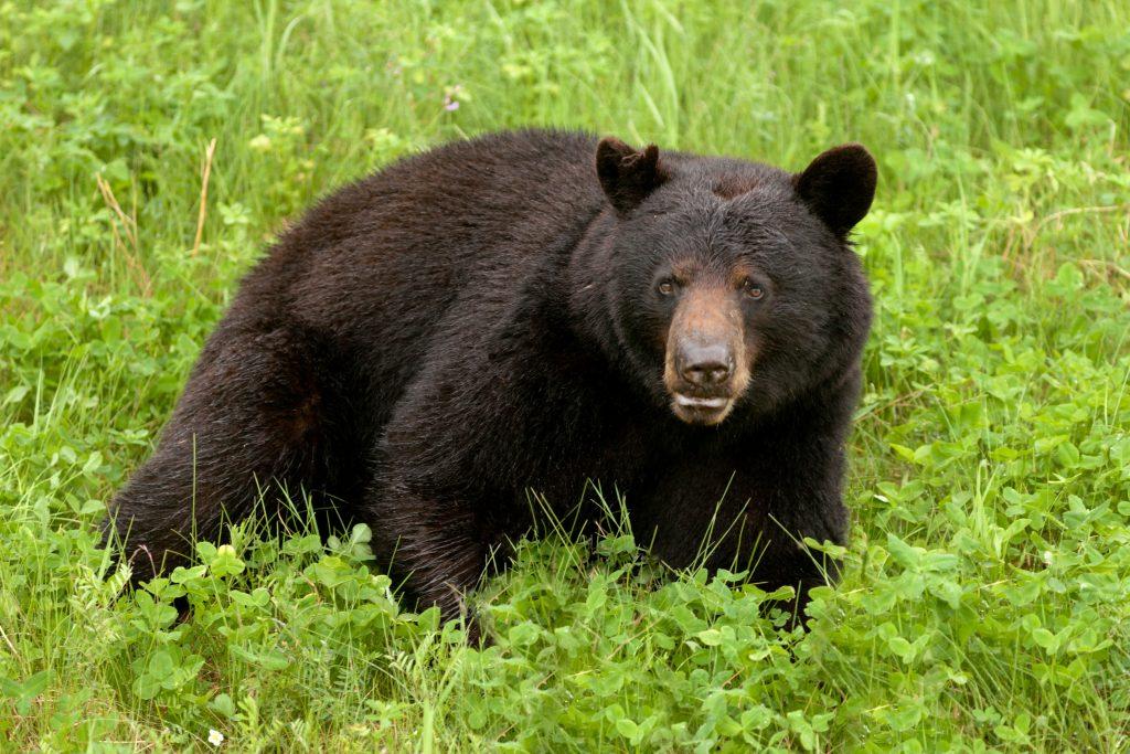 new jersey bear hunt
