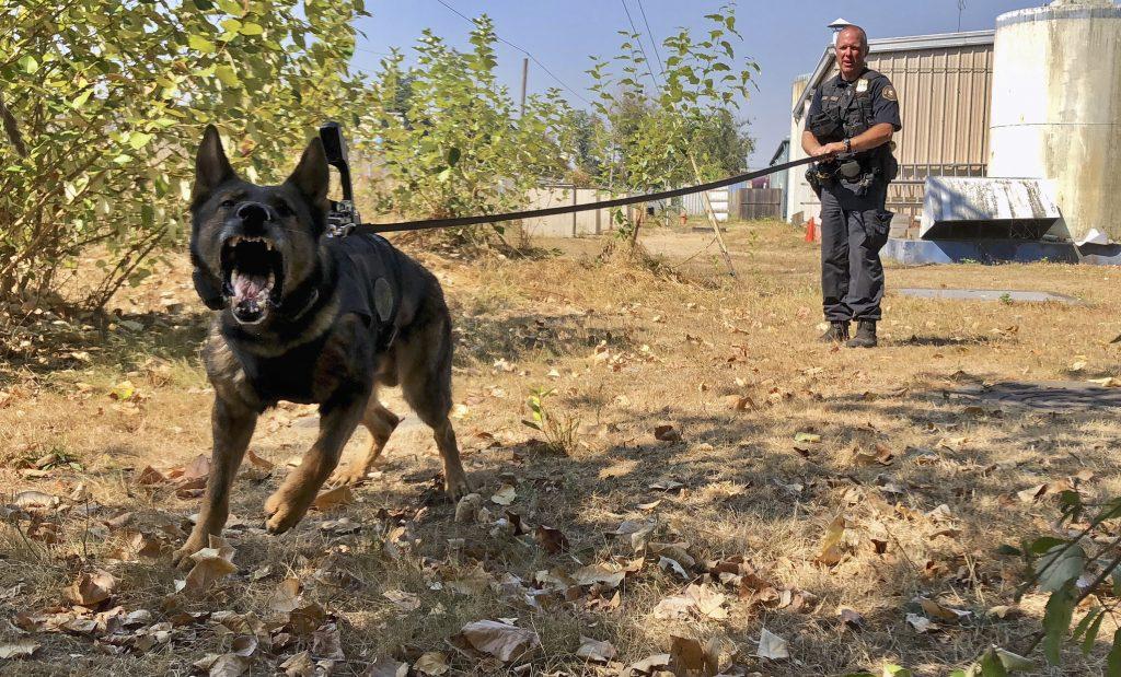 police dog camera