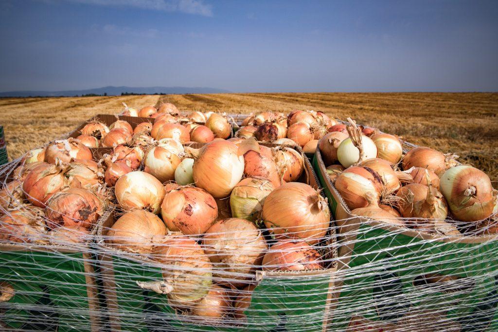 Extracting the dye potential of Onion Skins. | Natuurlijk