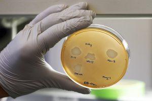 antibiotics bacteria