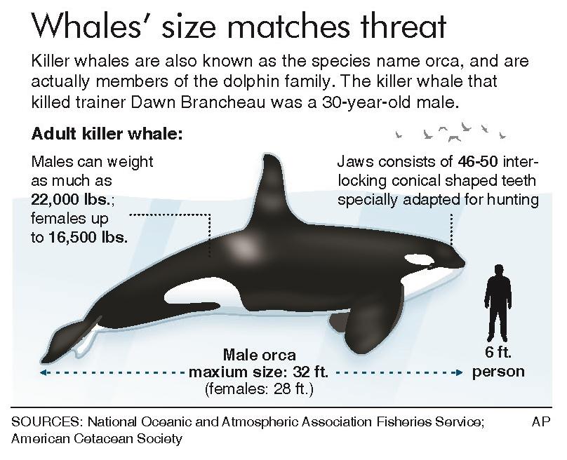orca ban