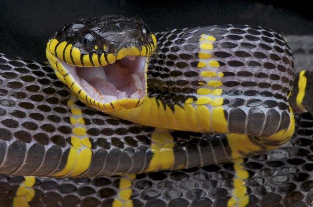 bronx zoo snake