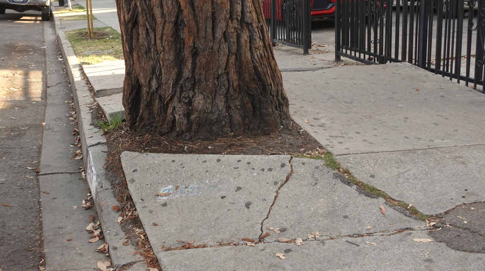 new york tree sidewalk