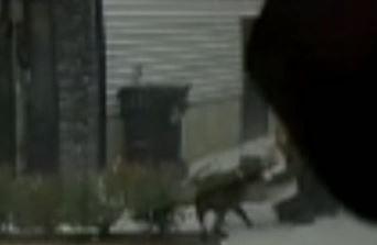 pit bull attacks 2020