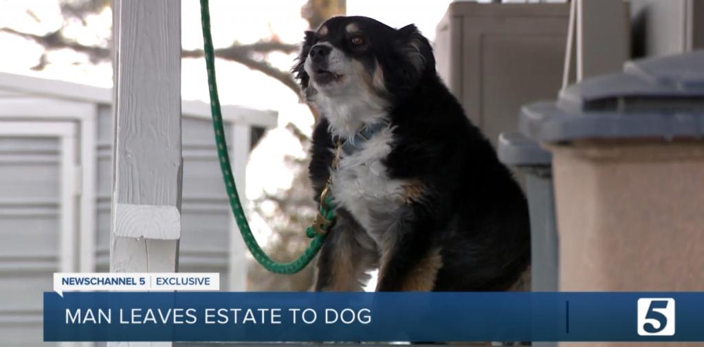 $5 million dog